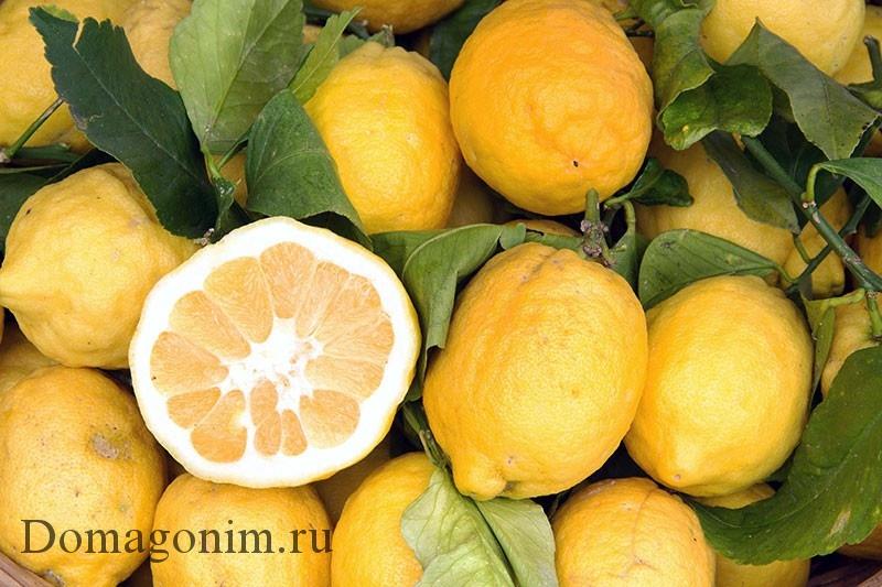 Домашний Лимончелло своими руками простой рецепт