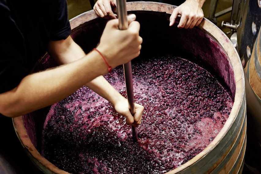 Закваска для вина своими руками. Виноградное сусло. Мезга виноградная