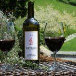 Почему так высоко ценится вино Каберне Совиньон (Cabernet Sauvignon)?