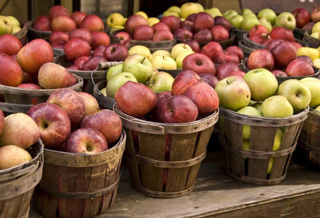 Основа изготовления кальвадоса это яблоки и груши ...