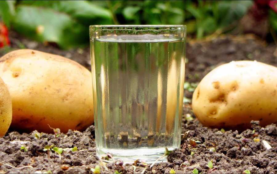 Самогон из картофеля в домашних условиях