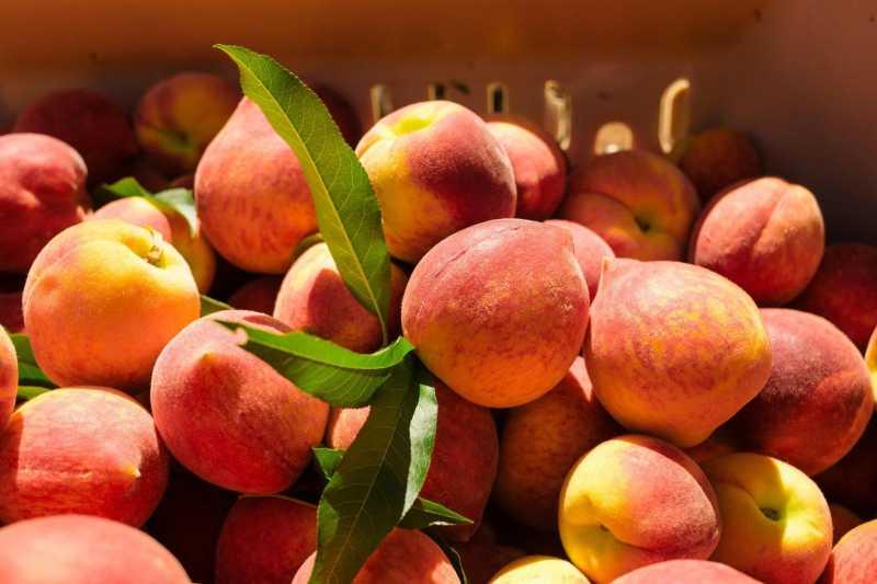 Персиковое вино в доашних условиях